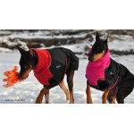 Chilly Dogs Coats